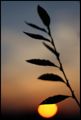 Aggrappandosi A Qualsiasi Cosa (Sartori Simone) Tags: sunset sky sun fall leaves foglie clouds geotagged tramonto nuvole ant cielo sole autunno formica ©allrightsreserved simonesartori resistereresistereresistere platinumheartaward fotopoetiphotopoetry