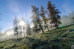 let the sun shine in (gregor H) Tags: autumn light fog forest austria haze shine larches vorarlberg brandnertal brserberg thesecretlifeoftrees