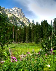 Cascade Canyon (jrtchris) Tags: mountains nature flickr view wildflowers grandteton classique cascadecanyon gtnp citrit platinumheartaward absolutelystunningscapes