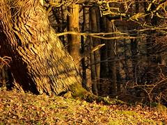 Edge Of The Wood (elhawk) Tags: that id taken damn wish soe i coppetthill damniwishidtakenthat