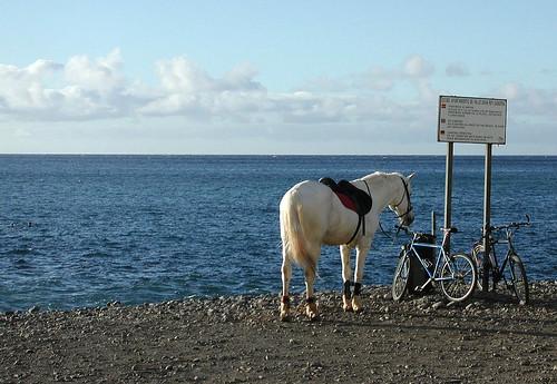 Pferd am Strand
