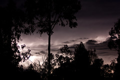 The Nexus (WilliamBullimore) Tags: longexposure trees storm silhouette night clouds australia queensland electricity lightning monopod cubism inclementweather electricalstorm supershot canonef70200mmf28lisusm canoneos450d canonrc1wirelessremote manfrotto190xbtripod burraburri manfrotto322rc2heavydutygripballhead australiathunderstorms