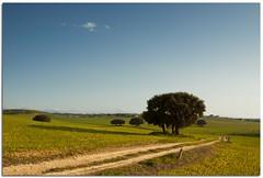 (Antonio Carrillo (Ancalop)) Tags: sky espaa tree verde green field canon arbol spain europa europe camino andalucia cielo granada campo usm lopez antonio almeria carrillo f4l 50d 740mm ancalop