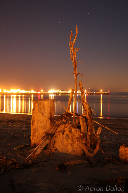 Stern's Wharf Behind Driftwood