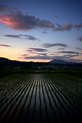Where the rice leads you (jasohill) Tags: sunset summer nature field japan night japanese evening rice angle paddy wide calm iwate backgrounds 2011 superaplus aplusphoto ringexcellence