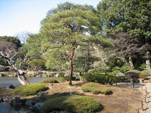 旧古河庭園(池周辺)