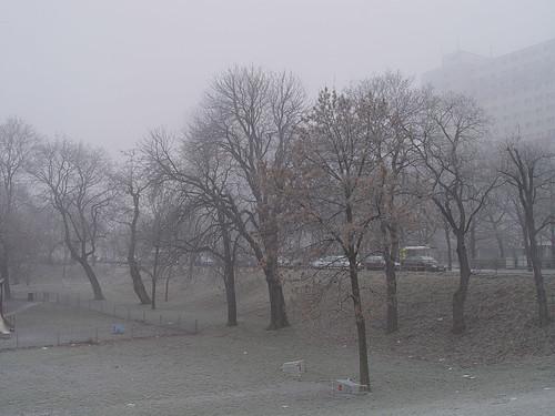 trees foggy
