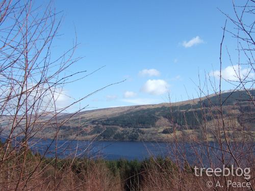 view over Loch Tay from the trial