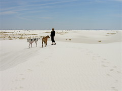 Wandering the White Sands (Laertes) Tags: stella dog newmexico sand whitesands greatdane gypsum jerrie oola