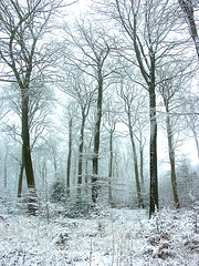 a sprinkling of snow in the Chilterns. (algo) Tags: england snow photography topf50 topv333 bravo topv1111 chilterns topv999 algo topv100 100f firstquality 50f megashot 200850plusfaves