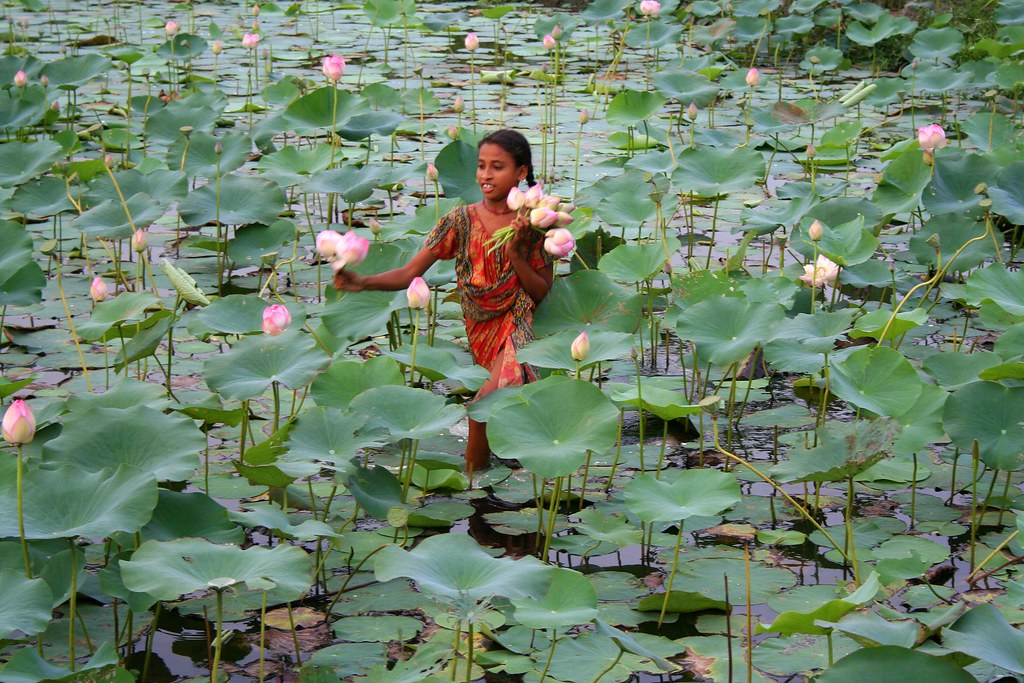 The Lotus Girl