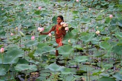 The Lotus Girl (Monsoon Lover ( On - Off )) Tags: life girl flickr child lotus joy newtown economy calcutta lotusflower gulshan valueoflife sudipmonsoonlover lotusgirl diamondclassphotographer flickrdiamond rajarhaat