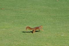 DSC_0916 (rich.reierson@verizon.net) Tags: golf papyrus 2008 isis