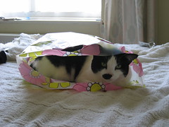 Percy In A Bag (John Topley) Tags: cats animals percy