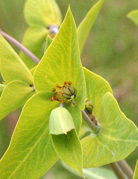 trekplant