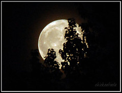 Moon Illusion: hiding in back of the tree (chickentinola) Tags: fullmoon moonillusion nikond40 nikkor15200vr