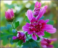 What a beautiful day (Smme eeZe) Tags: flower macro nature beauty spring bokeh sosweet