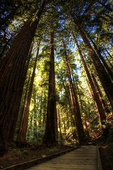 Towering Redwoods in Muir Woods (Photomike07 / MDSimages.com) Tags: world sanfrancisco california travel bridge sky usa ecology digital america forest giant photography blog nationalpark ancient nikon media unitedstates pacific nps footbridge path muirwoods processing bayarea northamerica marincounty tall redwood redwoods majestic westcoast sequoia primary hdr nationalmonument d3 towering muirwoodsnationalmonument ggnra goldengatenationalrecreationarea sequoiasempervirens parksystem theunforgettablepictures michaelsteighner mdsimages hyliteproductions photomike07 mdsimagescom hylitecom