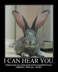 I can hear you. (mbkepp) Tags: school cute rabbit bunny poster fdsflickrtoys classroom buster motivational motivationalposter motivationalposters giantflemish