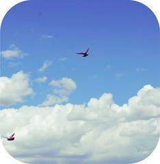 Birds in the Sky (jami_lee) Tags: sky bird birds clouds flying