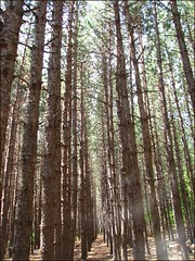 The Pines (Wendy J. Bush) Tags: camping trees summer camp good shepherd pines pinetrees 07 outreach thepines saveearth