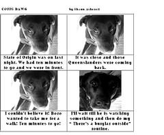 Coffs Dawg 2 (shaun ashcroft) Tags: dawg coffs