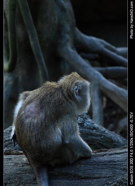 Monkey04