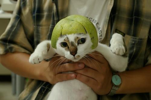 綠色妹妹頭
