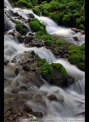 Wahkeena Creek (pdxsafariguy) Tags: oregon creek waterfall moss gorge wahkeena tomschwabel