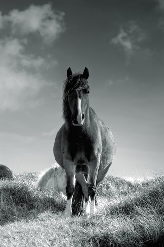 Horse on Hay Bluff