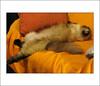 (.ccarriconde) Tags: ccarriconde cristinacarriconde mai gata minhagata mycat copyright©cristinacarricondeallrightsreserved ©cristinacarriconde