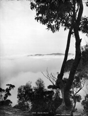Rising mists (Powerhouse Museum Collection) Tags: blackandwhite bw mountains vintage scenery powerhousemuseum glassplatenegative xmlns:dc=httppurlorgdcelements11 dc:identifier=httpwwwpowerhousemuseumcomcollectiondatabaseirn28339