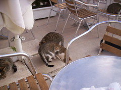 travel cats delphi greece