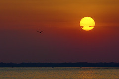 Sistiana Sunset (Michele Catania) Tags: sunset red sea sky orange sun bird birds silhouette yellow reflections exposure tramonto mare loneliness purple wind no space empty under violet uccelli michele sole acqua venezia gabbiani catania gabbiano desolation giulia friuli sistiana underexpose uccello emptyspace friuliveneziagiulia michelecatania