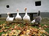 3+1 (elisabatiz) Tags: bird animal