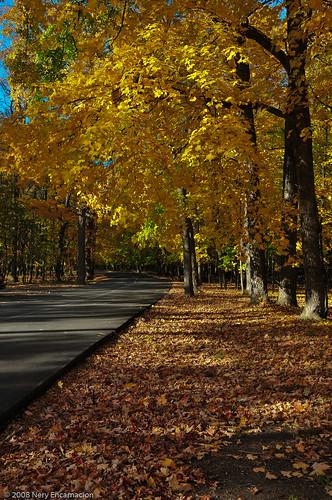Wheeling Forest Preserve Walk