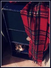 what? (alejausagi) Tags: cat hide gatita