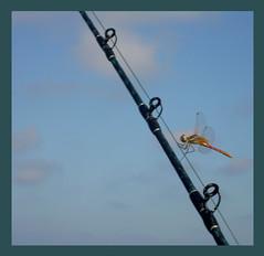 libellula (pinnagialla) Tags: barca mare obama libellula leggerezza evviva attimofuggente pinnagialla davidebentornato