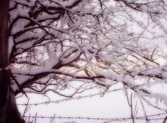 Even barbed wire is softened by snow (Autumnsonata) Tags: trees winter light snow nature beautiful beauty wales memories