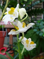 Flowers From My Garden #29 (ighosts) Tags: flowers house inspiration flower home beauty garden orchids macrounlimited