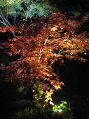 Matsushima mom 053 (lilycrooks) Tags: japan matsushima