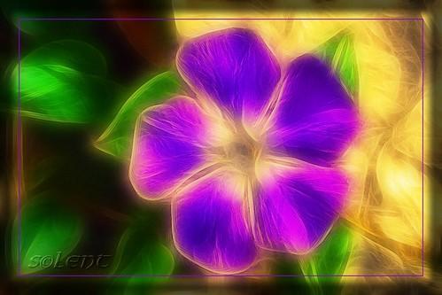 Prikazi osjećanja u boji - Page 3 3044651812_9a947186dd