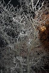 Ice on Trees at Night (Lotus21) Tags: winter snow cold tree ice weather night landscape seasons reststop foliage solstice pacificnorthwest washingtonstate backlighting easternwashington sigma1770 k200d justpentax lindabanning lindabanningphotography2008