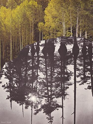 birchwood-bog web