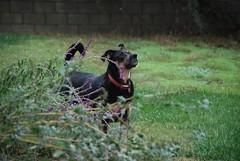 Look! Up in the sky! (WilWheaton) Tags: dog green ferris wilwheaton wwdn