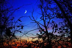 [フリー画像] [自然風景] [空の風景] [月の風景] [夕日/夕焼け/夕暮れ]       [フリー素材]