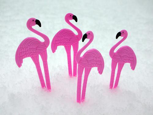 3 - Flamingos