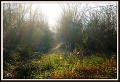 A Luz (Joao Antunes) Tags: natureza campo goleg boquilobo kartpostal pal riachos mywinners prnppppaulboquilobo goldstaraward jooantunes
