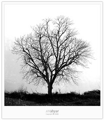 Always Alone (///ahyar) Tags: bw nature canon photography persian paradise alone village iran picture always  natures gorgan  golestan    mahyar  ziarat seyfi    mazookesh