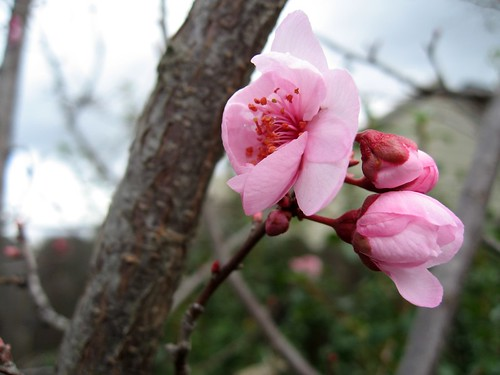 2009-02-14_flower1.jpg